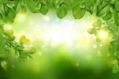 Tree leaves border on green defocused background,Tree leaves border on green defocused background